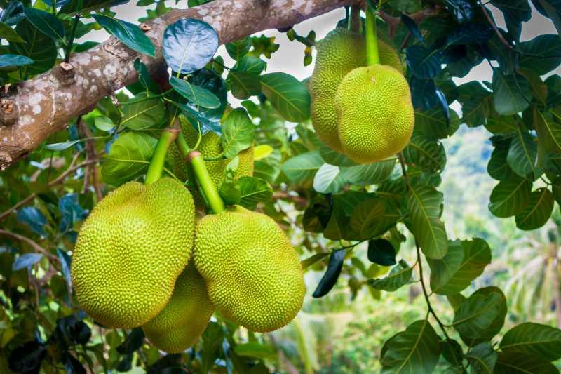 Alternative Frucht