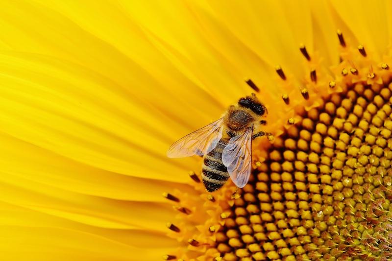 Farmen setzen auf Bienen
